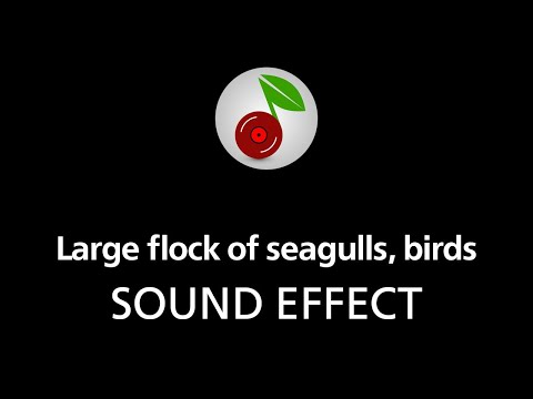 🎧 Large flock of seagulls, birds (looped), SOUND EFFECT