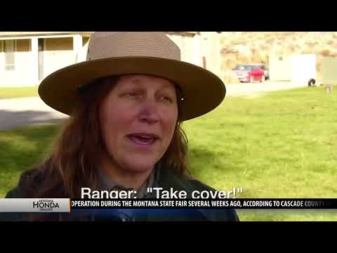 Rutting elk a danger in Yellowstone National Park