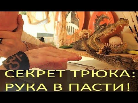 СЕКРЕТ ТРЮКА! Рука\голова в пасти крокодила, в чем секрет?
