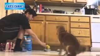 Кормление собаки  Щенок боится корма  Собаку кормят  Забавный щенок