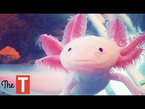 Thumbnail: 10 Strange Looking Animals That Are Actually Cute