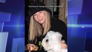 Barbra Streisand Clones Her Dog! Kristin Bell & Daughter Had Pinworms?!