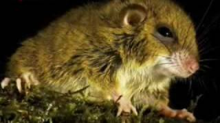 Nuevas especies descubiertas en Papúa