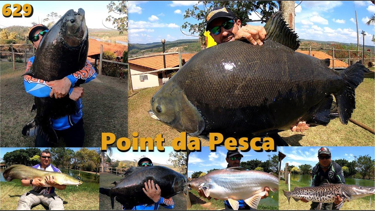 Pescaria 100% superfície com os tambas e peixes de couro no Point da Pesca - Fishingtur na TV 629