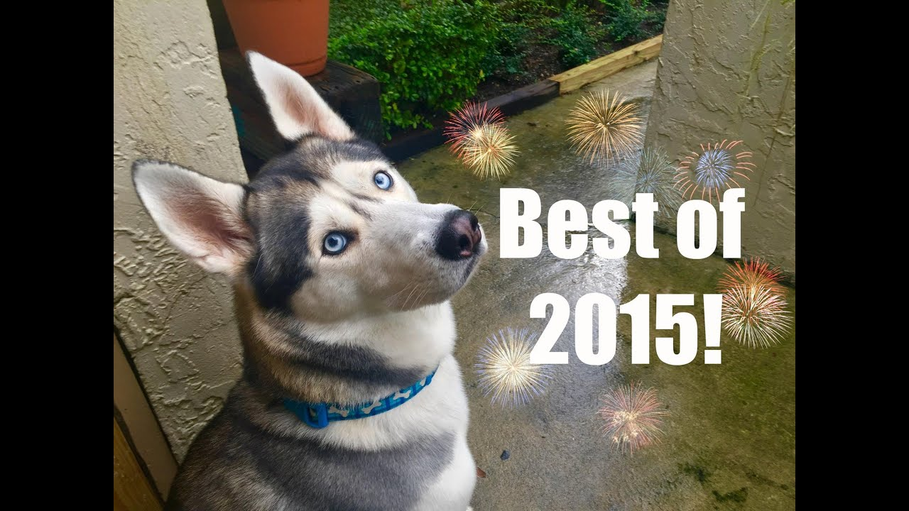 Gohan's Best Moments Of 2015!