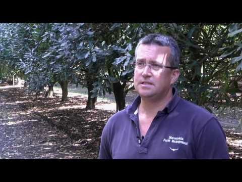 Maximising orchard productivity through orchard floor management