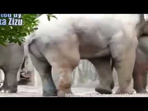 Changemakers: Odd Man Inn Animal Refuge from YouTube · Duration:  2 minutes 55 seconds