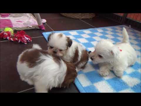 Vicky-Piper, Vania & Vitaline