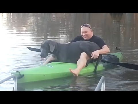 Great Dane Is So Determined To Fit Into Tiny Kayak