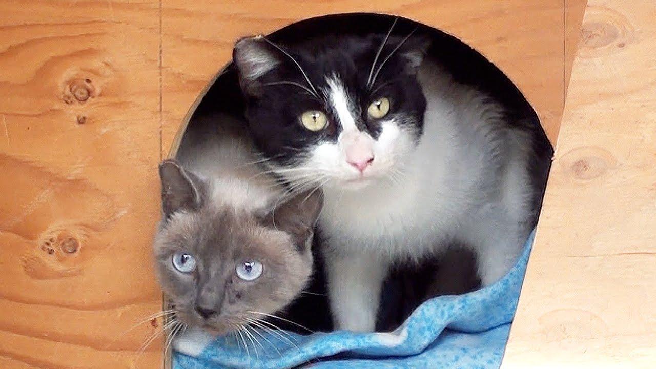 Saving Cat Lives! Barn Cat Program - YouTube