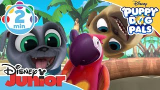 Puppy Dog Pals Español - Puppy Dog Pals Español Capitulo #13
