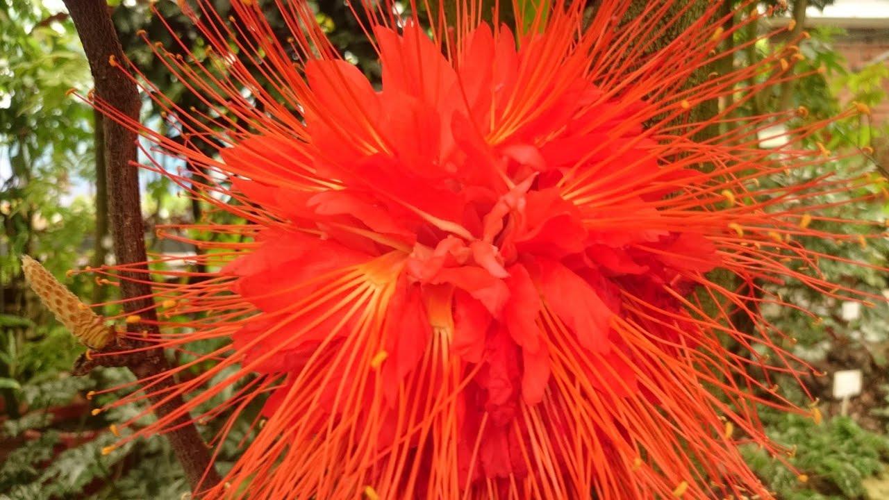 Цветы оптом в санкт-петербурге, купить цветы оптом в санкт-петербурге, горшечные растения, комнатные растения, цветочная база, луковичные оптом, тюльпаны оптом.