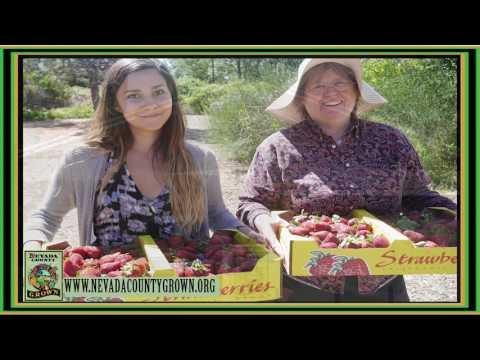 Nevada County Grown  Food Hub