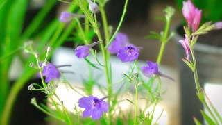 How To - What is an Annual and Perennial? Armstrong Garden Centers