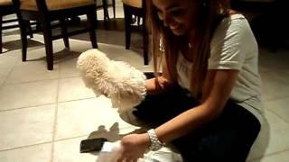 How To Diaper A Puppy!