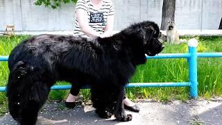 Выставка собак в Кривом Роге. Часть 1.