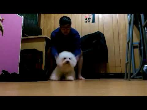Best Funny Dog Vines - Can't Stop!! // 煞不住車!!