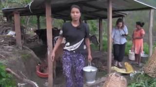 How to milk a cow in rural Nepal.