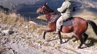 Вот так может только. Лошадь Кабардинской Породы!!
