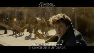 Fantastyczne Zwierzęta: Zbrodnie Grindelwalda - BUMPER HUNT HIM PL