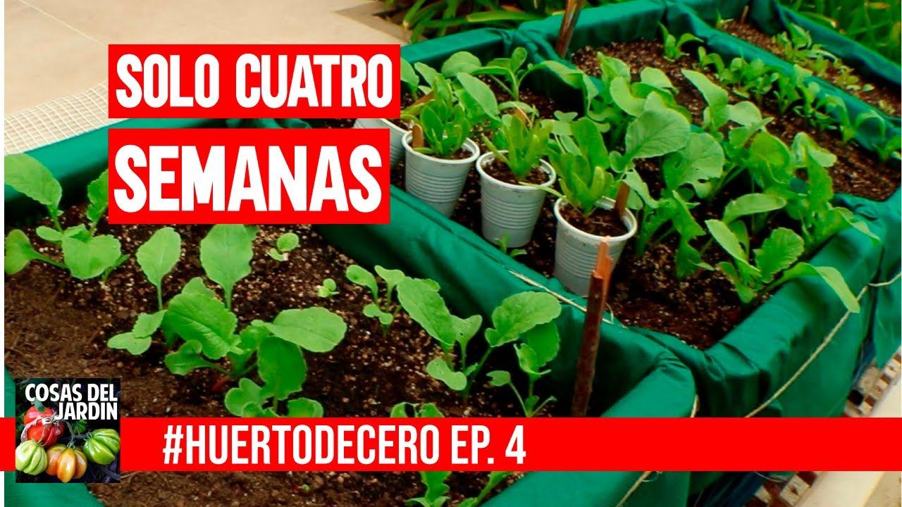 INCREIBLE RESULTADO EN SOLO 4 SEMANAS   ???????? #HUERTODECERO EP. 4 - HUERTO URBANO