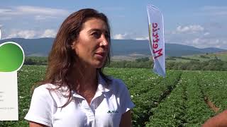 БЕЛХИМ - пълна технология в картофи