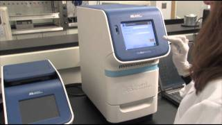 Amplify Sample with The StepOnePlus Real Time System qPCR step 6