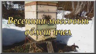 Весенняя работа на пасеке: массовый облет пчел (видеоурок). Пчеловодство для начинающих