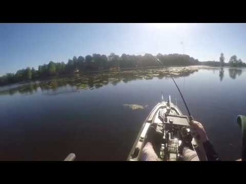 Bass fishing in hillsborough river youtube for Hillsborough river fishing