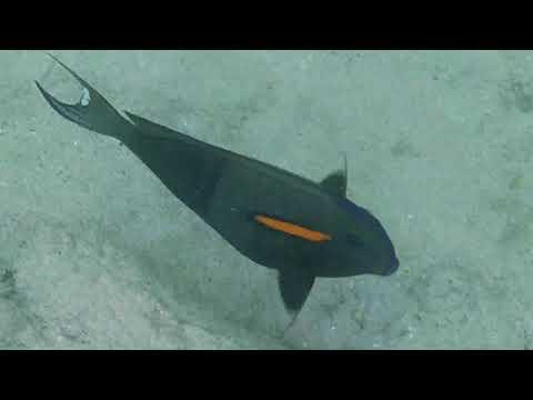 Hawaii Big Island - Snorkeling