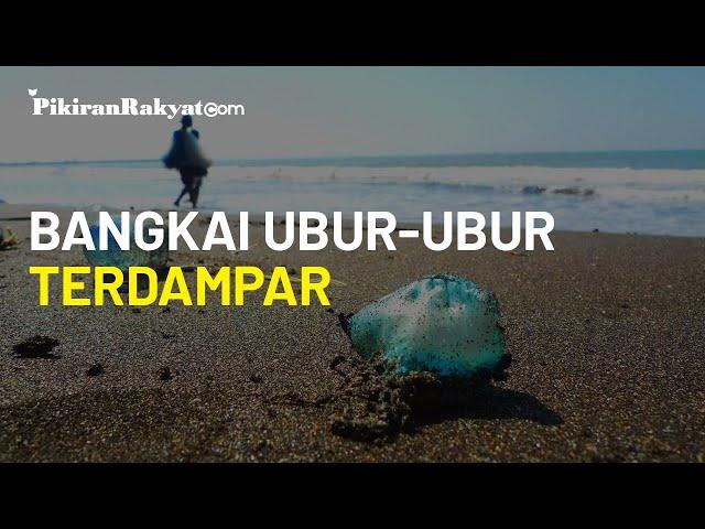 Bangkai Ubur-ubur Banyak Terdampar di Pantai Selatan Kulon Progo, Ancam Keselamatan Pengunjung