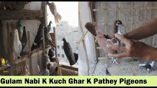 Gulam Nabi K Kabootaron K Ghar K Pathey - Pigeons Loft in Karachi