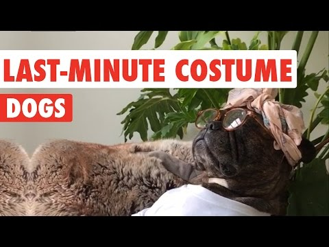 Last Minute Costume Dogs Video Compilation 2016