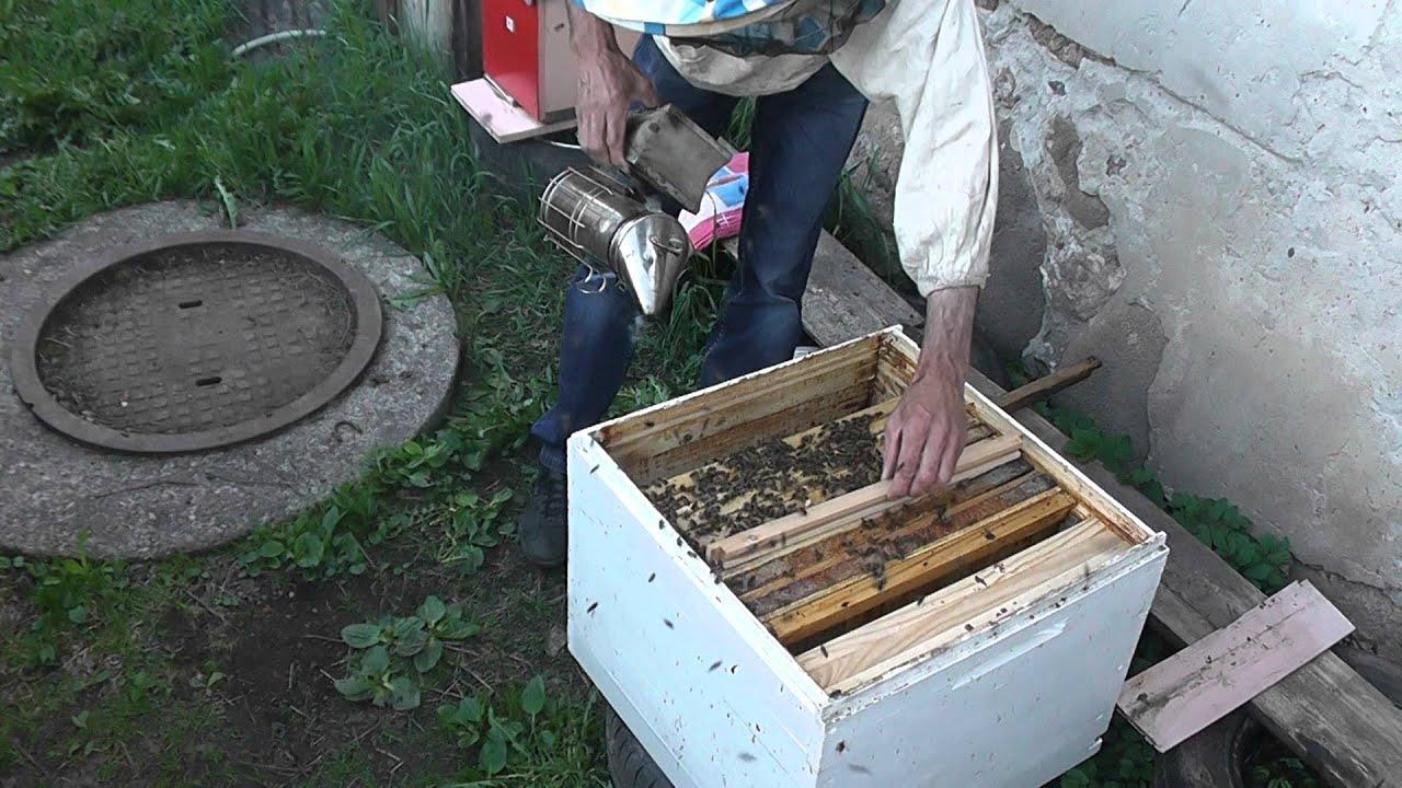 Порно, купить пчелопакет у цебро