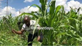 LIVE: Bodi ya Maji yaongea baada ya 'KUFYEKA'' mahindi yaliyopandwa pembezoni ya Mto wami