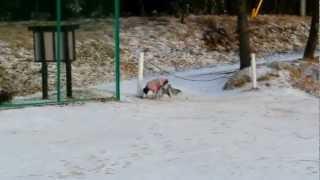クリスマスイブの朝の雪遊び.