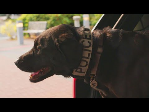 Ritch Cassidy - Meet the Police Dog that Nabbed Jared from Subway