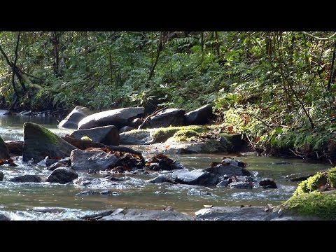 Relaxing creek water sounds Rainforest Chill out nature