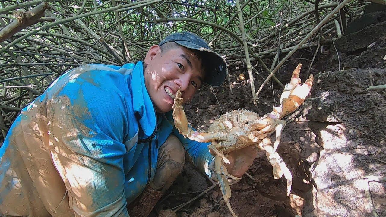 洞里抓出大螃蟹,这种快乐陪我走过30年,刀仔这次又抓几个大货