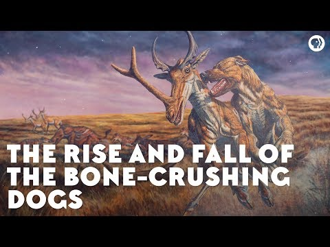 The Rise And Fall Of The Bone-Crushing Dogs