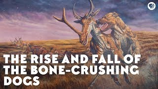 The Rise and Fall of the BoneCrushing Dogs