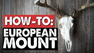 Do-It-Yourself European Mount - How to Clean a Deer Skull