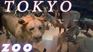 Токио. Путешествие всей семьей. Фильм 2. Зоопарк Уэно / Видео