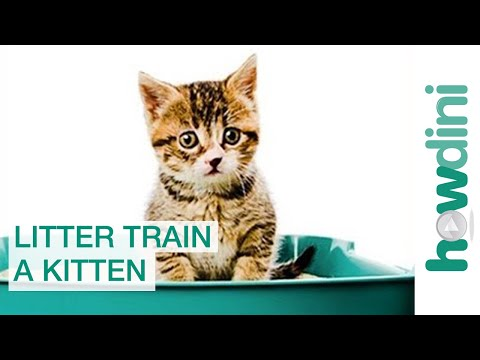 How to Litter Train a Kitten: Litter Training a Cat