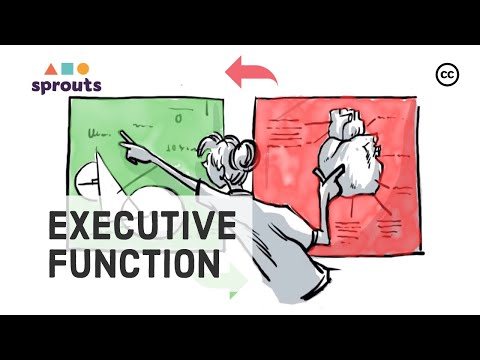 Executive Function: The Brain's Control Center
