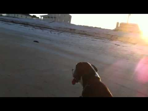 Brobeck Danes walk on the Beach