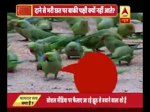 देखिए, वृंदावन के रहस्यमयी तोते का | ABP News Hindi