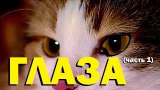 видео Зрение кошек (несколько интересных фактов)