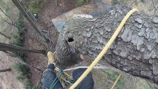 45 Degree Cherry Tree Takedown With Tree Spikes Over a Building 2019   Part 2