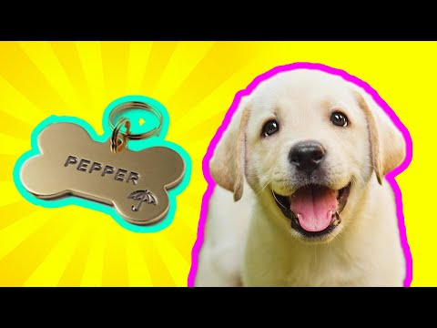 250 PERFECT Dog Names names - Guaranteed To LOVE these names from YouTube · Duration:  14 minutes 19 seconds